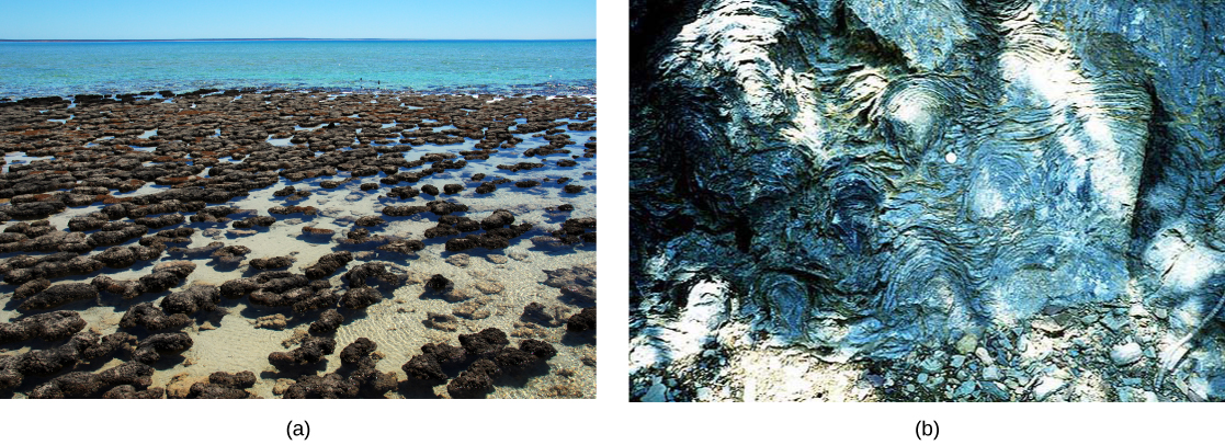 Photo A shows a mass of gray mounds in shallow water. Photo B shows a swirl pattern in white and gray marbled rock.