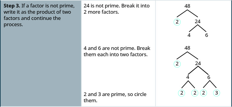 "One row down, the first cell says: ""Step 3. If a factor is not prime, write it as the product of two factors and continue the process."" In the second cell, the instructions say: ""24 is not prime. Break it into 2 more factors."" The third cell contains the original factor tree, with 48 at the top and two downward-pointing branches terminating at 2, which is underlined, and 24. Two more branches descend from 24 and terminate at 4 and 6 respectively. One line down, the instructions in the middle of the cell say ""4 and 6 are not prime. Break them each into two factors."" In the cell on the right, the factor tree is repeated once more. Two branches descend from the 4 and terminate at 2 and 2. Both 2s are circled. Two more branches descend from 6 and terminate at a 2 and a 3, which are both circled. The instructions on the left say ""2 and 3 are prime, so circle them."""