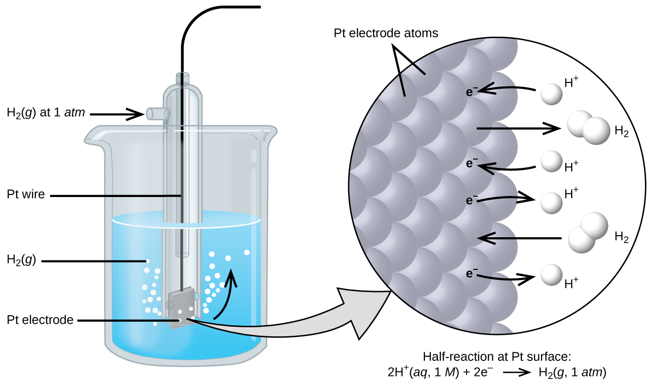 "The figure shows a beaker just over half full of a blue liquid. A glass tube is partially submerged in the liquid. Bubbles, which are labeled ""H subscript 2 ( g )"" are rising from the dark grey square, labeled ""P t electrode"" at the bottom of the tube. A curved arrow points up to the right, indicating the direction of the bubbles. A black wire which is labeled ""P t wire"" extends from the dark grey square up the interior of the tube through a small port at the top. A second small port extends out the top of the tube to the left. An arrow points to the port opening from the left. The base of this arrow is labeled ""H subscript 2 ( g ) at 1 a t m."" A light grey arrow points to a diagram in a circle at the right that illustrates the surface of the P t electrode in a magnified view. P t atoms are illustrated as a uniform cluster of grey spheres which are labeled ""P t electrode atoms."" On the grey atom surface, the label ""e superscript negative"" is shown 4 times in a nearly even vertical distribution to show electrons on the P t surface. A curved arrow extends from a white sphere labeled ""H superscript plus"" at the right of the P t atoms to the uppermost electron shown. Just below, a straight arrow extends from the P t surface to the right to a pair of linked white spheres which are labeled ""H subscript 2."" A curved arrow extends from a second white sphere labeled ""H superscript plus"" at the right of the P t atoms to the second electron shown. A curved arrow extends from the third electron on the P t surface to the right to a white sphere labeled ""H superscript plus."" Just below, an arrow points left from a pair of linked white spheres which are labeled ""H subscript 2"" to the P t surface. A curved arrow extends from the fourth electron on the P t surface to the right to a white sphere labeled ""H superscript plus."" Beneath this atomic view is the label ""Half-reaction at P t surface: 2 H superscript plus ( a q, 1 M ) plus 2 e superscript negative right pointing arrow H subscript 2 ( g, 1 a t m )."""