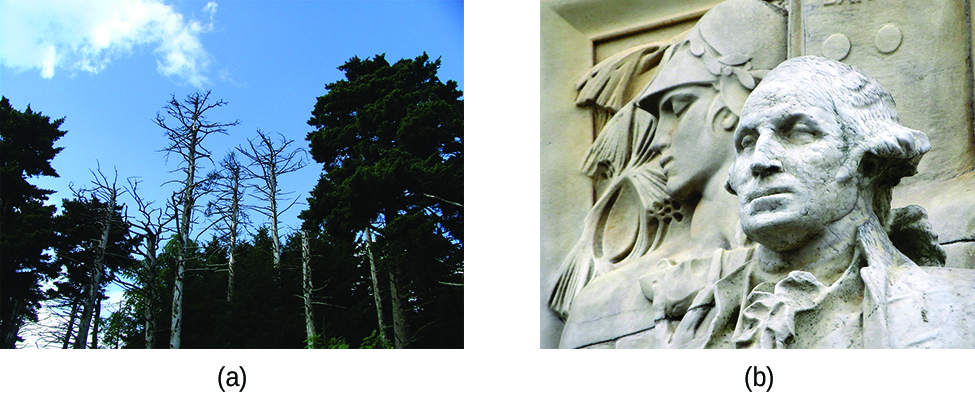 Two photos are shown. Photograph a on the left shows the upper portion of trees against a bright blue sky. The tops of several trees at the center of the photograph have bare branches and appear to be dead. Image b shows a statue of a man that appears to from the revolutionary war era in either marble or limestone.