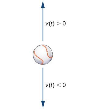 A picture of a baseball with an arrow above it pointing up and an arrow below it pointing down. The arrow pointing up is labeled v(t) > 0, and the arrow pointing down is labeled v(t) < 0.