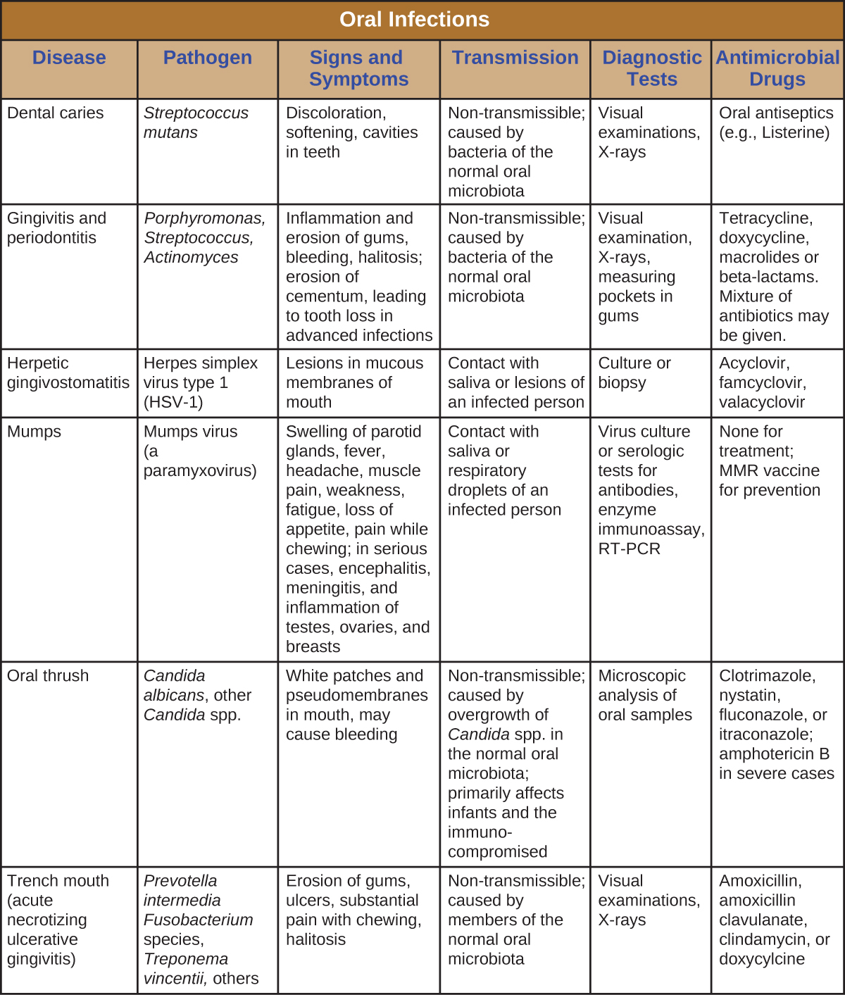 Table titled: Oral Infections. Columns: Disease, Pathogen, Signs and Symptoms, Transmission, Diagnostic Tests, Antimicrobial Drugs. Dental caries; Streptococcus mutans; Discoloration, softening, cavities in teeth; Non-transmissible; caused by bacteria of the normal oral microbiota; Visual examinations, X-rays Oral antiseptics (e.g., Listerine). Gingivitis and periodontitis; Porphyromonas, Streptococcus, Actinomyces; Inflammation and erosion of gums, bleeding, halitosis; erosion of cementum leading to tooth loss in advanced infections; Non-transmissible; caused by bacteria of the normal oral microbiota; Visual examination, X-rays, measuring pockets in gums; Tetracycline, doxycycline, macrolides or beta-lactams. Mixture of antibiotics may be given. Herpetic gingivostomatitis; Herpes simplex virus type 1 (HSV-1); Lesions in mucous membranes of mouth Contact with saliva or lesions of an infected person Culture or biopsy; Acyclovir, famcyclovir, valacyclovir. Mumps; Mumps virus (a paramyxovirus); Swelling of parotid glands, fever, headache, muscle pain, weakness, fatigue, loss of appetite, pain while chewing; in serious cases, encephalitis, meningitis, and inflammation of testes, ovaries, and breasts; Contact with saliva or respiratory droplets of an infected person; Virus culture or serologic tests for antibodies, enzyme immunoassay, RT-PCR; None for treatment; MMR vaccine for prevention. Oral thrush; Candida albicans, other Candida spp.;  White patches and pseudomembranes in mouth, may cause bleeding; Nontransmissible; caused by overgrowth of Candida spp. in the normal oral microbiota; primarily affects infants and the immunocompromised. Microscopic analysis of oral samples; Clotrimazole, nystatin, fluconazole, or itraconazole; amphotericin B in severe cases. Trench mouth (acute necrotizing ulcerative gingivitis); Prevotella intermedia Fusobacterium species, Treponema vincentii, others; Erosion of gums, ulcers, substantial pain with chewing, halitosis; Nontransmissible; caused by members of the normal oral microbiota; Visual examinations, X-rays; Amoxicillin, amoxicillin clavulanate, clindamycin, or doxycycline.