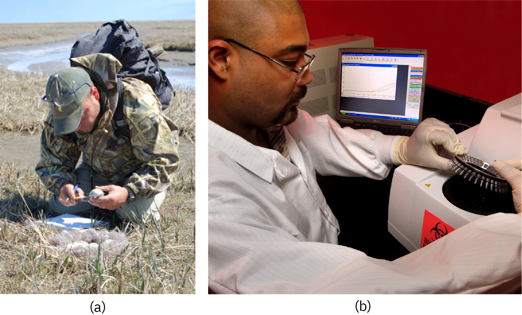 (a) A person in a field measuring an egg. (b) A person prepares an assay with a centerfuge.