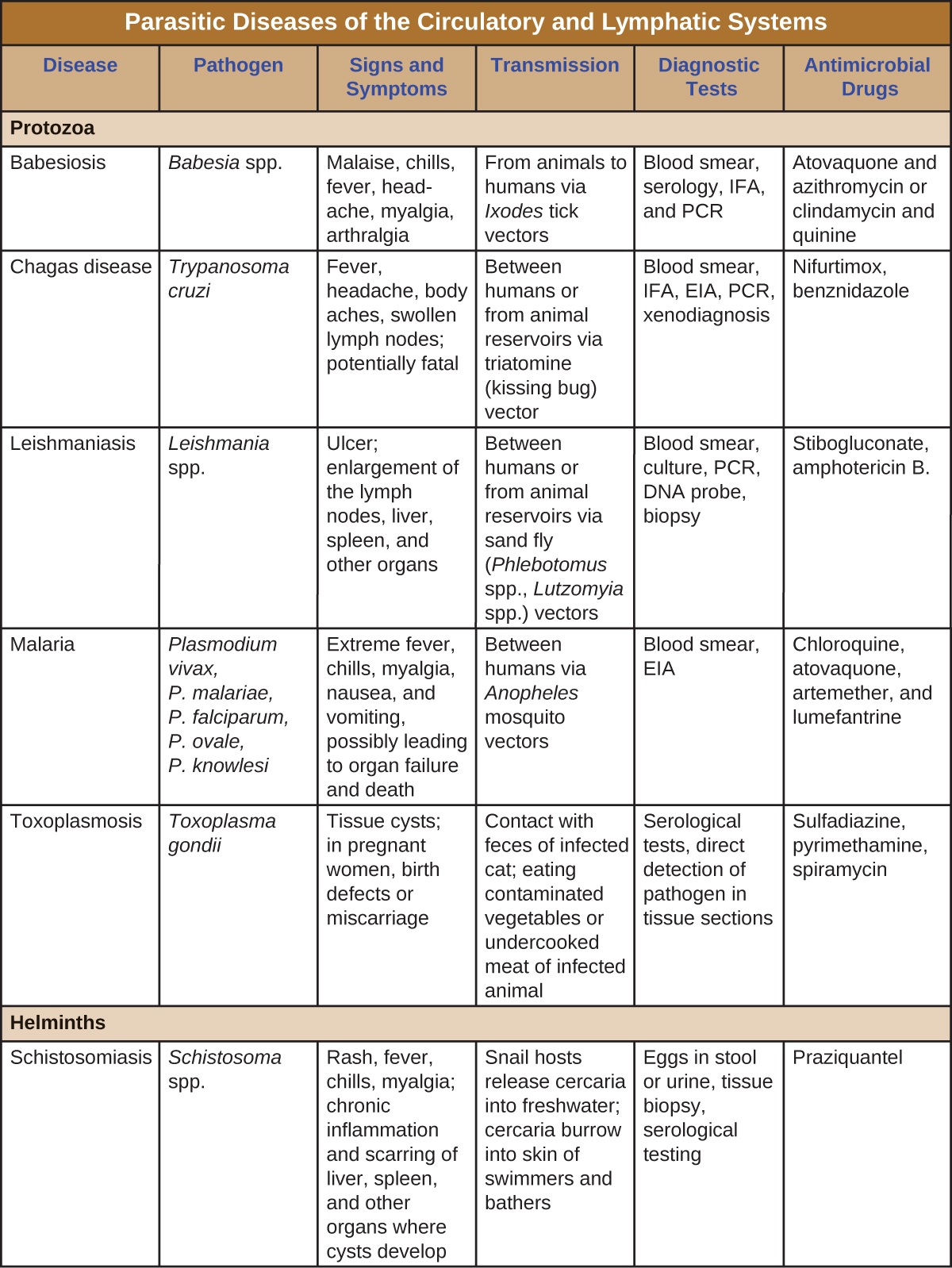 Table titled: Parasitic Diseases of the Circulatory and Lymphatic Systems. Columns: Disease, Pathogen, Signs and Symptoms, Transmission, Diagnostic Tests, Antimicrobial Drugs, Protozoa. Babesiosis; Babesia spp.; Malaise, chills, fever, headache, myalgia, arthralgia; From animals to humans via Ixodes tick vectors; Blood smear, serology, IFA, and PCR; Atovaquone and azithromycin or clindamycin and quinine. Chagas disease ; Trypanosoma cruzi; Fever, headache, body aches, swollen lymph nodes; potentially fatal; Between humans or from animal reservoirs via triatomine (kissing bug) vector; Blood smear, IFA, EIA, PCR, xenodiagnoses; Nifurtimox, benznidazole. Leishmaniasis Leishmania spp.; Ulcer; enlargement of the lymph nodes, liver, spleen, and other organs; Between humans or from animal reservoirs via sand fly (Phlebotomus spp., Lutzomyia spp.) vectors; Blood smear, culture, PCR, DNA probe, biopsy; Stibogluconate, amphotericin B, miltefosine. Malaria; Plasmodium vivax, P. malariae, P. falciparum, P. ovale, P. knowlesi; Extreme fever, chills, myalgia, nausea, and vomiting, possibly leading to organ failure and death; Between humans via Anopheles mosquito vectors; Blood smear, EIA; Chloroquine, atovaquone, artemether, and lumefantrine. Toxoplasmosis Toxoplasma gondii; Tissue cysts; in pregnant women, birth defects or miscarriage; Contact with feces of infected cat; eating contaminated vegetables or undercooked meat of infected animal; Serological tests, direct detection of pathogen in tissue sections; Sulfadiazine, pyrimethamine, spiramycin; Helminths. Schistosomiasis; Schistosoma spp.; Rash, fever, chills, myalgia; chronic inflammation and scarring of liver, spleen, and other organs where cysts develop; Snail hosts release cercaria into freshwater; cercaria burrow into skin of swimmers and bathers; Eggs in stool or urine, tissue biopsy, serological testing; Praziquantel..