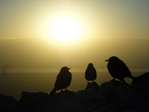Three birds on a cliff with the sun rising in the background.
