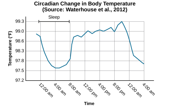 """A line graph is titled """"Circadian Change in Body Temperature (Source: Waterhouse et al., 2012)."""" The y-axis, is labeled """"temperature (degrees Fahrenheit),"""" ranges from 97.2 to 99.3. The x-axis, which is labeled """"time,"""" begins at 12:00 A.M. and ends at 4:00 A.M. the following day. The subjects slept from 12:00 A.M. until 8:00 A.M. during which time their average body temperatures dropped from around 98.8 degrees at midnight to 97.6 degrees at 4:00 A.M. and then gradually rose back to nearly the same starting temperature by 8:00 A.M. The average body temperature fluctuated slightly throughout the day with an upward tilt, until the next sleep cycle where the temperature again dropped."""