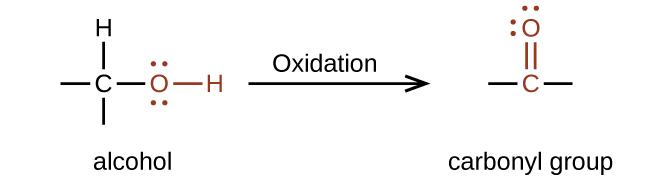 "A reaction is shown. On the left appears an alcohol and on the right, a carbonyl group. Above the reaction arrow appears the word ""oxidation."" The alcohol is represented as a C atom with dashes to the left and below, an H atom bonded above, and an O atom bonded to an H atom in red connected to the right. The O atom has two sets of electron dots. The carbonyl group is indicated in red with a C atom to which an O atom is double bonded above. Dashes appear left and right of the C atom in black. The O atom has two sets of electron dots."