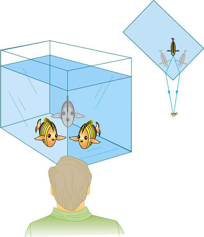 A person looks at a fish tank and he sees the same fish in two different directions at the edge of the water tank facing him.