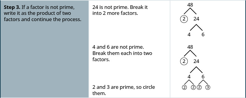 Step 3 is to treat the composite factor as a product, break it into two more factors and continue the process. 24 is not prime. It is broken into 4 and 6. 4 and 6 are not prime. 4 is broken into its factors 2 and 2, both of which are circled. 6 is not prime. It is broken into factors 2 and 3, both of which are circled.