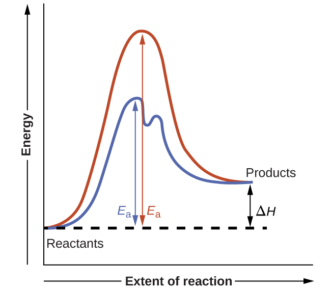 "A graph is shown with the label, ""Extent of reaction,"" appearing in a right pointing arrow below the x-axis and the label, ""Energy,"" in an upward pointing arrow just left of the y-axis. Approximately one-fifth of the way up the y-axis, a very short, somewhat flattened portion of both a red and a blue curve are shown. This region is labeled ""Reactants."" A red concave down curve extends upward to reach a maximum near the height of the y-axis. From the peak, the curve continues downward to a second horizontally flattened region at a height of about one-third the height of the y-axis. This flattened region is labeled, ""Products."" A second curve is drawn in blue with the same flattened regions at the start and end of the curve. The height of this curve is about two-thirds the height of the first curve and just right of its maximum, the curve dips low, then rises back and continues a downward trend at a lower height, but similar to that of the red curve. A horizontal dashed straight line extends from the point where both curves start in the ""Reactants"" region. A double sided arrow extends from the ""Products"" region at the end of both curves to this horizontal dashed line. This is labeled ""capital delta H."" A double sided arrow extends from the dashed horizontal line to the peak of the red concave down curve. This arrow is labeled ""E subscript a."" Another double sided arrow extends from the dashed horizontal line to the peak of the blue curve. This arrow is labeled ""E subscript a."""