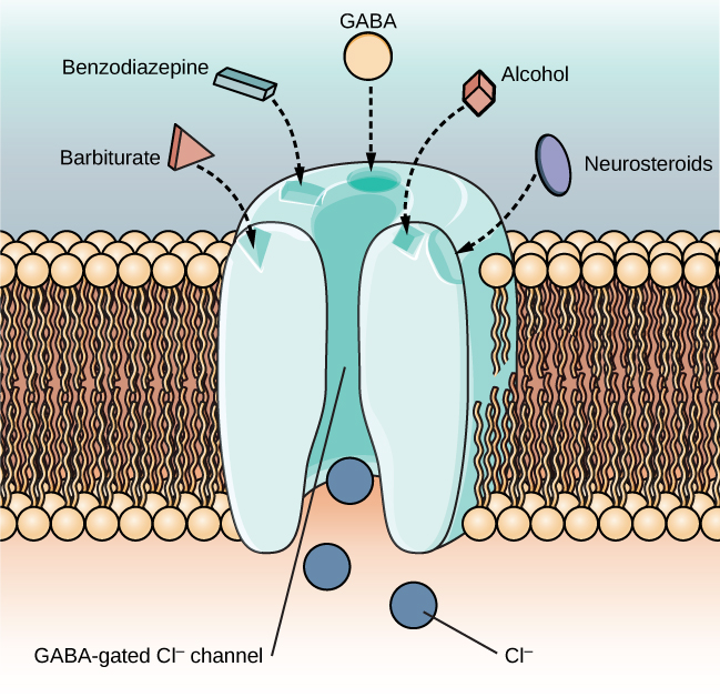 An illustration of a GABA-gated chloride channel in a cell membrane shows  receptor sites for barbiturate, benzodiazepine, GABA, alcohol, and neurosteroids, as well as three negatively-charged chloride ions passing through the channel. Each drug type has a specific shape, such as triangular, rectangular or square, which corresponds to a similarly shaped receptor spot.