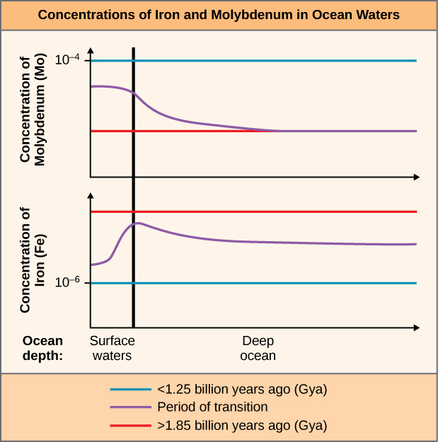 This figure is titled Concentrations of iron and molybdenum in ocean waters. It contains two graphs. Both graphs are line graphs that have two category labels on the X axis: surface waters and deep ocean. The top graph shows the concentration of molybdenum, abbreviated capital M lowercase O. Less than 1.25 billion years ago, the M O concentration was steady at 10 to the minus 4 in both surface waters and deep ocean. During the period of transition, the M O concentration just below the 10 to the minus 4 line in surface waters but dropped in the deep ocean. Greater than 1.85 billion years ago, the M O concentration in both surface waters and deep ocean was steadily at the reduced levels found in the deep ocean during the period of transition. The bottom graph shows the concentration of iron, abbreviated capital F lowercase E. Greater than 1.85 billion years ago, the F E concentration was steady near the top of the graph in both surface waters and deep ocean. During the period of transition, the F E concentration rose sharply in surface waters almost to the line for Greater than 1.85 billion years ago. It then dropped to a slightly lower lever and remained steady there in the deep ocean. Less than 1.85 billion years ago, the F E concentration in both surface waters and deep ocean was steadily at 10 to the minus 6, below that of both other plot lines.