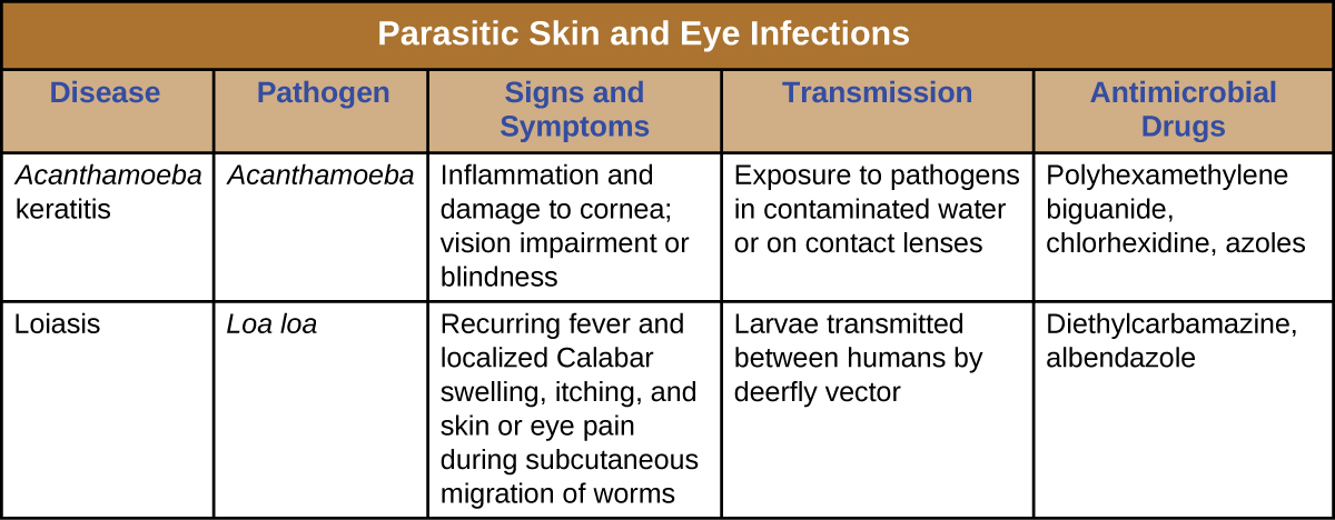 Table titled: Parasitic Skin and Eye Infections. Columns: Disease, Pathogen, Signs and Symptoms, Transmission, Antimicrobial Drugs. Acanthamoeba keratis, Acanthamoeba, Inflammation and damage to cornea; vision impairment or blindness, Exposure to pathogens in contaminated water or on contact lenses, Polyhexamethylene biguanide, chlorhexidine, azoles. Loiasis, Loa loa, Recurring fever and localized Calabar swelling, itching, and skin or eye pain during subcutaneous migration of worms, Larvae transmitted between humans by deerfly vector, Diethylcarbamazine, albendazole.
