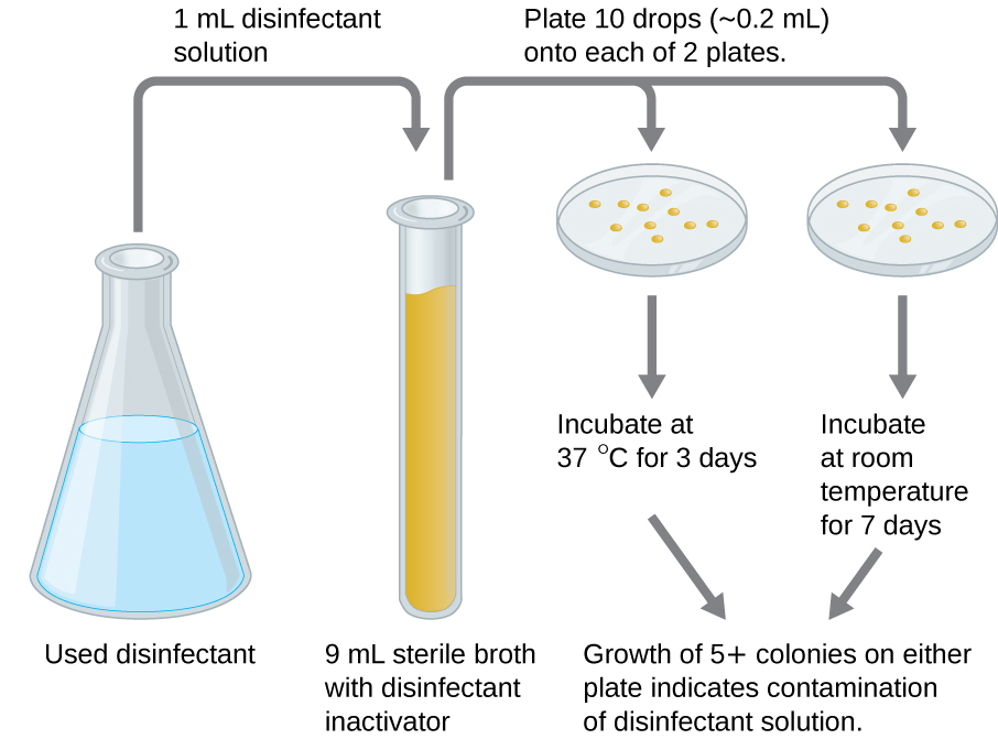 A diagram showing a flask with used disinfectant. 1 ml is moved to a 9 ml sterile broth with disinfectant inactivator. Plate 10 drops (0.2 ml) onto each of 2 plates. One is incubated at 37 degrees C for 3 days, the other is incubated at room temperature for 7 days. The growth of 5 or more colonies on either plate indicates contamination of disinfectant solution.