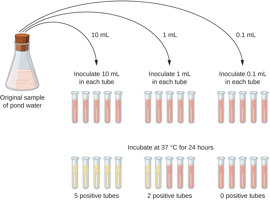 A diagram where the original sample of pond water is diluted into tubes containing lactose broth (a pink broth). 10 mL of the sample is placed into each of 5 lactose broth tubes. Another 5 tubes get 1 mL each of the sample. Another 5 tubes get 0.1 mL of sample. After 24 hours of incubation at 37°C some tubes have a color change. All of the 5 tubes containing 10 mL of the sample turned yellow and show gas in the smaller inner tube. 2 of the 5 tubes that got 1 mL of the original sample turned yellow and show gas; 3 of these tubes remain pink. All of the tubes that got 0.1 mL of the original sample remain pink.