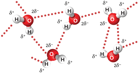 Figure shows the molecular structure of water. The charge on each oxygen atom is 2 delta minus. The charge on each hydrogen atom is delta plus.