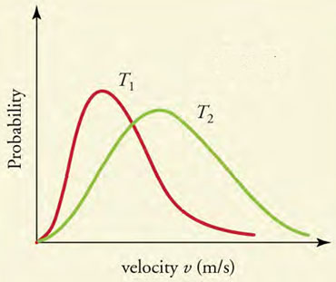 The graph shows a vertical, y-axis labeled Probability and a horizontal, x-axis labeled velocity v (m over s). There are two distribution curves, a red one marked T1 and a green one labeled T2. The red curve rises quickly and the gradually tapers off. The green curve rises slower than the red curve (and thus is to the right of the red curve), peaks lower than the peak of the red curve and then tapers down less quickly than the red curve.