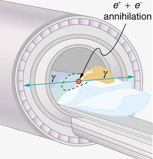 The figure shows a patient undergoing a scan in a cylindrical device. The P E T system uses two gamma ray photons produced by positron electron annihilation. These gamma rays are emitted in opposite directions.