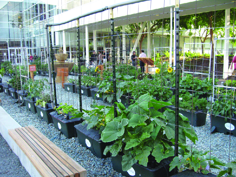 This photo shows a garden next to a building with benches and walkways.