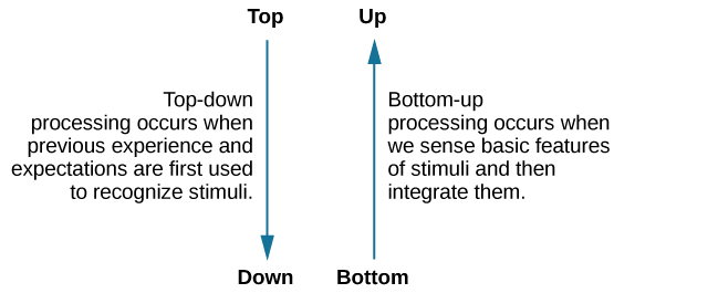 "The figure includes two vertical arrows. The first arrow comes from the word ""Top"" and points downward to the word ""Down."" The explanation reads, ""Top-down processing occurs when previous experience and expectations are first used to recognize stimuli."" The second arrow comes from the word ""bottom"" and points upward to the word ""up."" The explanation reads, ""Bottom-up processing occurs when we sense basic features of stimuli and then integrate them."""