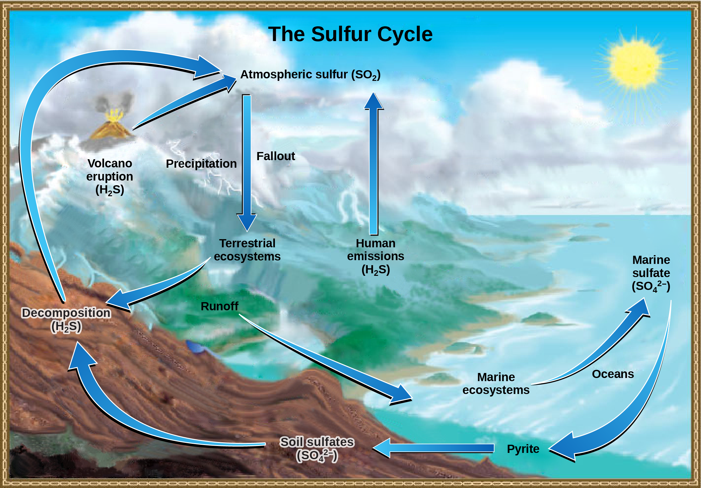 This illustration shows the sulfur cycle. Sulfur enters the atmosphere as sulfur dioxide, or upper S upper O 2, via human emissions, decomposition of upper H 2 upper S, and volcanic eruptions. Precipitation and fallout from the atmosphere return sulfur to the Earth, where it enters terrestrial ecosystems. Sulfur enters the oceans via runoff, where it becomes incorporated in marine ecosystems. Some marine sulfur becomes pyrite, which is trapped in sediment. If upwelling occurs, the pyrite enters the soil and is converted to soil sulfates.