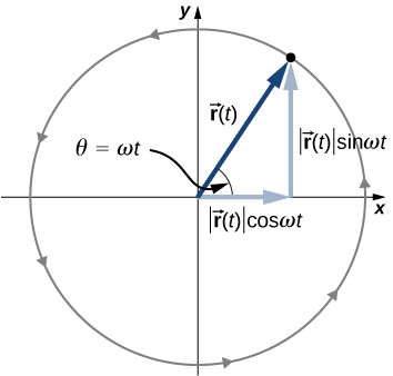 A circle radius r, centered on the origin of an x y coordinate system is shown. Radius r of t is a vector from the origin to a point on the circle and is at an angle of theta equal to omega t to the horizontal. The x component of vector r is the magnitude of r of t times cosine of omega t. The y component of vector r is the magnitude of r of t times sine of omega t. The circulation is counterclockwise around the circle.