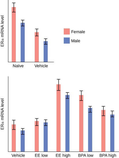 This figure is a bar graph. The vertical line is labeled  ER mRNA level. These bars are pink for female and blue for male. From left to right the results are. For Naïve there is long pink line, and a shorter blue line. For vehicle there is a shorter pink line, and a even shorter blue line. For the second graph the vertical line this time reads ER mRNA level.  The horizontal axis reads Vehicle, EE low, EE high, BPA low, PBA high. From left to right they are listed. The first is vehicle and there is a longer pink line and a shorter blue line. For EE low there is a slightly longer pink line than blue line. For EE high there is a long pink line with a slightly shorter pink line. For BPA there is a medium pink line with a slightly shorter blue line. And for BPA high there is a slightly shorter pink line with a slightly shorter blue line.
