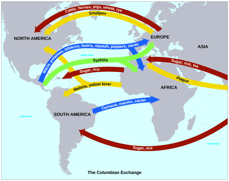 "A map shows the ""Columbian Exchange"" of goods and diseases. Goods include crops such as maize, potatoes, tobacco, beans, squash, peppers, cacao, cassava, and manioc traveling east as well as rye, wheat, rice, sugar, and tea traveling west. Animals such as cattle, horses, and pigs traveled westward. Diseases include syphilis, malaria, smallpox, yellow fever, and plague."