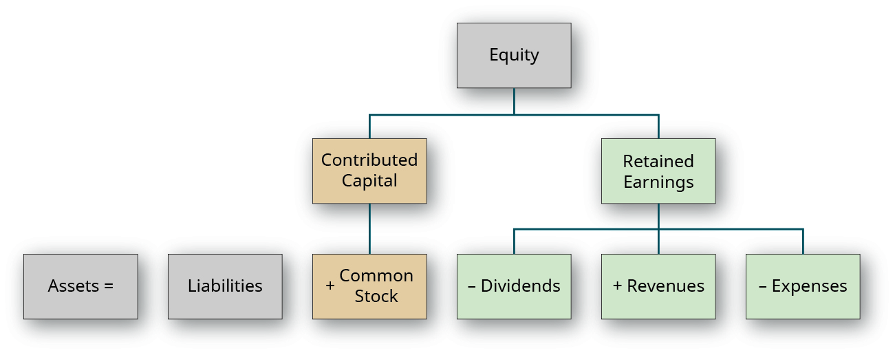 A hierarchical group of boxes. The top box is labeled Equity. The next row connected by a line has two boxes, labeled left to right: Contributed Capital and Retained Earnings. There are three boxes below Contributed Capital, labeled left to right: Assets equal; Liabilities; plus Common Stock. Common Stock is connected to Contributed Capital by a line while Assets equal and Liabilities are not. There are three boxes below Retained Earnings connected by a line, labeled left to right: minus Dividend; plus Revenues; minus Expenses.
