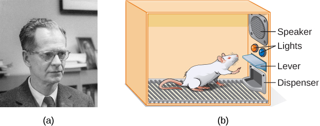Photograph A shows B.F. Skinner. Illustration B shows a rat in a Skinner box: a chamber with a speaker, lights, a lever, and a food dispenser.