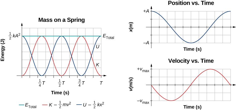 Graphs of the energy, position, and velocity as functions of time for a mass on a spring. On the left is the graph of energy in Joules (J) versus time in seconds. The vertical axis range is zero to one half k A squared. The horizontal axis range is zero to T. Three curves are shown. The total energy E sub total is shown as a green line. The total energy is a constant at a value of one half k A squared. The kinetic energy K equals one half m v squared is shown as a red curve. K starts at zero energy at t=0, and rises to a maximum value of one half k A squared at time 1/4 T, then decreases to zero at 1/2 T, rises to one half k A squared at 3/4 T, and is zero again at T. Potential energy U equals one half k x squared is shown as a blue curve. U starts at maximum energy of one half k A squared at t=0, decreases to zero at 1/4 T, rises to one half k A squared at 1/2 T, is zero again at 3/4 T and is at the maximum of one half k A squared again at t=T. On the right is a graph of position versus time above a graph of velocity versus time. The position graph has x in meters, ranging from –A to +A, versus time in seconds. The position is at +A and decreasing at t=0, reaches a minimum of –A, then rises to +A. The velocity graph has v in m/s, ranging from minus v sub max to plus v sub max, versus time in seconds. The velocity is zero and decreasing at t=0, and reaches a minimum of minus v sub max at the same time that the position graph is zero. The velocity is zero again when the position is at x=-A, rises to plus v sub max when the position is zero, and v=0 at the end of the graph, where the position Is again maximum.