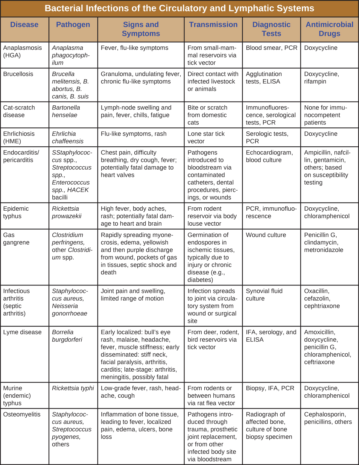 Table titled: Bacterial Infections of the Circulatory and Lymphatic Systems. Columns: Disease, Pathogen, Signs and Symptoms, Transmission, Diagnostic Tests, Antimicrobial Drugs. Anaplasmosis (HGA); Anaplasma phagocytophilum; Fever, flu-like symptoms; From small-mammal reservoirs via tick vector; Blood smear, PCR; Doxycycline. Brucellosis; Brucella melitensis, B. abortus, B. canis, B. suis; Granuloma, undulating fever, chronic flu-like symptoms; Direct contact with infected livestock or animals; Agglutination tests, ELISA; Doxycycline, rifampin. Cat-scratch disease; Bartonella henselae; Lymph-node swelling and pain, fever, chills, fatigue; Bite or scratch from domestic cats; Immunofluorescence, serological tests, PCR; None for immunocompetent patients. Ehrlichiosis (HME); Ehrlichia chaffeensis;Flu-like symptoms, rash; Lone star tick vector; Serologic tests, PCR; Doxycycline. Endocarditis/pericarditis; Staphylococcus spp., Streptococcus spp., Enterococcus spp., HACEK bacilli; Chest pain, difficulty breathing, dry cough, fever; potentially fatal damage to heart valves; Pathogens introduced to bloodstream via contaminated catheters, dental procedures, piercings, or wounds; Echocardiogram, blood culture; Ampicillin, nafcillin, gentamicin, others; based on susceptibility testing. Epidemic typhus; Rickettsia prowazekii; High fever, body aches, rash; potentially fatal damage to heart and brain; From rodent reservoir via body louse vector; PCR, immunofluorescence; Doxycycline, chloramphenicol. Gas gangrene; Clostridium perfringens, other Clostridium spp.; Rapidly spreading myonecrosis, edema, yellowish and then purple discharge from wound, pockets of gas in tissues, septic shock and death; Germination of endospores in ischemic tissues, typically due to injury or chronic disease (e.g., diabetes); Wound culture; Penicillin G, clindamycin, metronidazole. Infectious arthritis (septic arthritis); Staphylococcus aureus, Neisseria gonorrhoeae; Joint pain and swelling, limited range of motion; Infection spreads to joint via circulatory system from wound or surgical site; Synovial fluid culture; Oxacillin, cefazolin, cephtriaxone. Lyme disease; Borrelia burgdorferi; Early localized: bull's eye rash, malaise, headache, fever, muscle stiffness; early disseminated: stiff neck, facial paralysis, arthritis, carditis; late-stage: arthritis, meningitis, possibly fatal; From deer, rodent, bird reservoirs via tick vector; IFA, serology, and ELISA; Amoxicillin, doxycycline, penicillin G, chloramphenicol, ceftriaxone. Murine (endemic) typhus; Rickettsia typhi; Low-grade fever, rash, headache, cough; From rodents or between humans via rat flea vector; Biopsy, IFA, PCR; Doxycycline, chloramphenicol. Osteomyelitis; Staphylococcus aureus, Streptococcus pyogenes, others; Inflammation of bone tissue, leading to fever, localized pain, edema, ulcers, bone loss; Pathogens introduced through trauma, prosthetic joint replacement, or from other infected body site via bloodstream; Radiograph of affected bone, culture of bone biopsy specimen; Cephalosporin, penicillins, others.