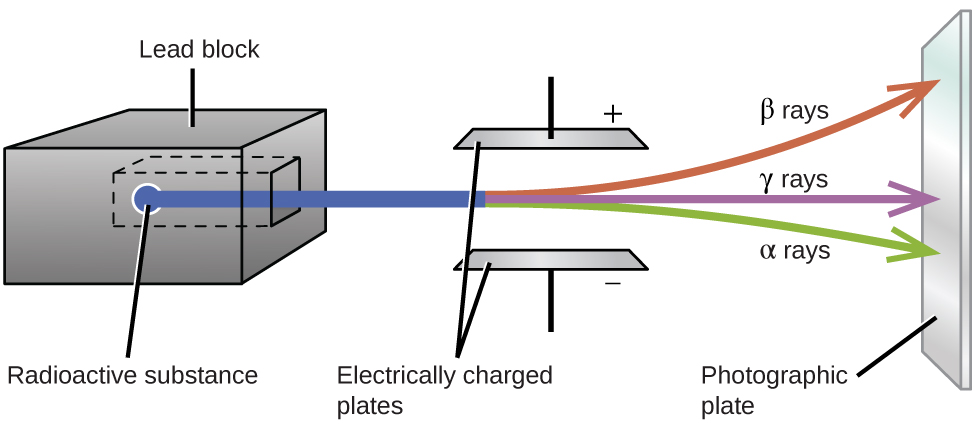 "A diagram is shown. A gray box on the left side of the diagram labeled ""Lead block"" has a chamber hollowed out in the center in which a sample labeled ""Radioactive substance"" is placed. A blue beam is coming from the sample, out of the block, and passing through two horizontally placed plates that are labeled ""Electrically charged plates."" The top plate is labeled with a positive sign while the bottom plate is labeled with a negative sign. The beam is shown to break into three beams as it passes in between the plates; in order from top to bottom, they are red, labeled ""beta rays,"" purple labeled ""gamma rays"" and green labeled ""alpha rays."" The beams are shown to hit a vertical plate labeled ""Photographic plate"" on the far right side of the diagram."