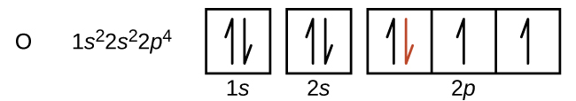 "This figure includes the element symbol O followed by the electron configuration 1 s superscript 2 2 s superscript 2 2 p superscript 4. An orbital diagram follows, which consists of two individual squares, labeled as, ""1 s,"" and, ""2 s,"" below followed by a grouping of three connected squares which are labeled, ""2 p."" All boxes are oriented in a row. The two individual squares and the first square in the row of connected squares contain a pair of half arrows. One half arrow in each pair points up, and one points down. The downward pointing arrow in the first square in the row of connected squares is red. The remaining two squares each contain single upward pointing half arrows."