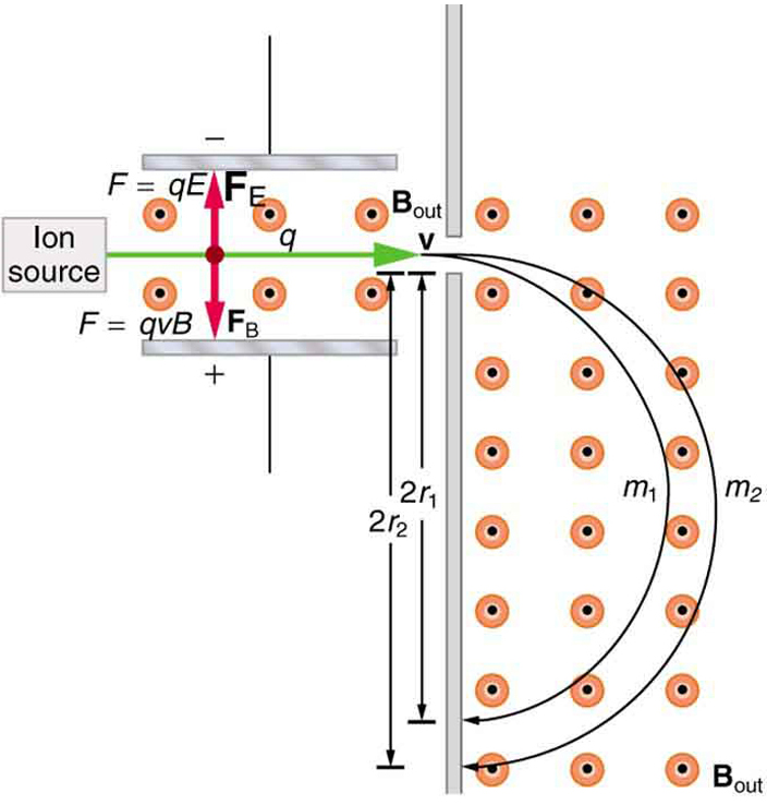 Diagram of a mass spectrometer. Ions travel to the right with velocity v from the ion source. Magnetic field lines come out of the page between two charged plates on either side of the ion beam. The electric force F equals q E acts on the ions in an upward direction while the magnetic force F equals q v B acts in a downward direction. The forces have the same magnitude and thus the ions travel in a straight line between the two plates. The ions then enter another region where the magnetic field lines come out of the page. An ion of mass 1 curves around, traveling a net distance of 2 r 1. An ion of mass 2 curves around, traveling a net distance of 2 r 2.