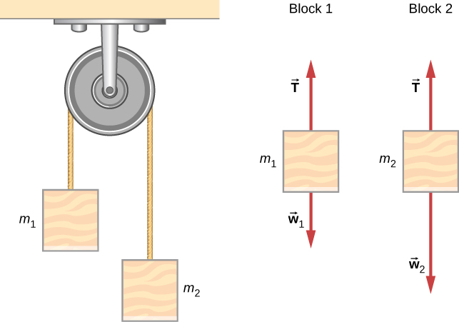 An Atwood machine consists of masses suspended on either side of a pulley by a string passing over the pulley. In the figure, mass m sub 1 is on the left and mass m sub 2 is on the right. The free body diagram of block one shows mass one with force vector T pointing vertically up and force vector w sub one pointing vertically down. The free body diagram of block two shows mass two with force vector T pointing vertically up and force vector w sub two pointing vertically down.