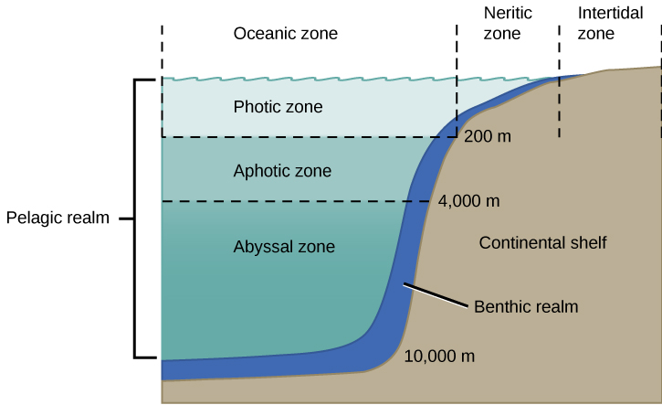 An illustration showing a cross-section of the continental shelf next to the ocean. From left to right are: the oceanic zone in the region of deep water; the neritic zone in the shallow region; and the intertidal zone where the ocean meets the land at the surface. From top to bottom are: the photic zone from the surface to a depth of 200 meters; the aphotic zone from 200 meters to 4000 meters; and the abyssal zone from 4000 meters to 10,000 meters. A thin section of the oceanic zone extending from top to bottom and adjacent to the continental shelf is labeled the benthic realm. All of the ocean's open water is referred to as the pelagic realm, which is labeled on the left.