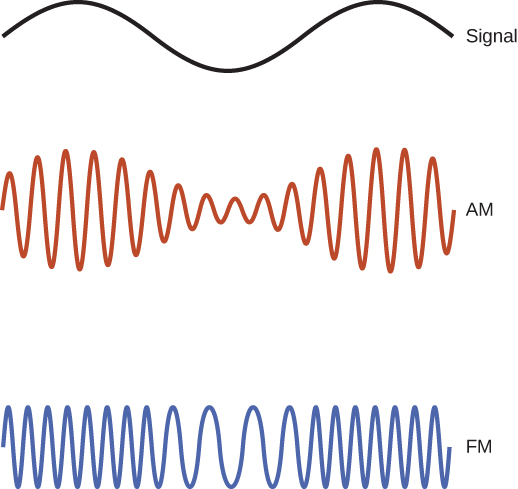 Figure shows three sinusoidal waves. The first one, labeled signal, has a larger wavelength than the other two. The second one, labeled AM has its amplitude modified according to the amplitude of the signal wave. The third one, labeled FM, has its frequency modified according to the amplitude of the signal wave.