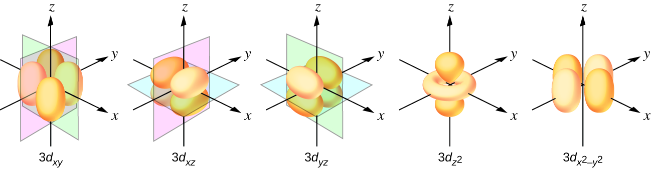 "This figure includes diagrams of five d orbitals. Each diagram includes three axes. The z-axis is vertical and is denoted with an upward pointing arrow. It is labeled ""z"" in the first diagram. Arrows similarly identify the x-axis with an arrow pointing from the rear left to the right front, diagonally across the figure and the y-axis with an arrow pointing from the left front diagonally across the figure to the right rear of the diagram. These axes are similarly labeled as ""x"" and ""y."" The first through third diagrams show four orange balloon-like shapes. These diagrams differ however in the orientation of the shapes along the axes and the x-, y-, and z-axis labels have each been replaced with the letter L. Planes are added to the figures to help show the orientation differences with these diagrams. In the first diagram, a green plane is oriented vertically through the length of the x-axis and a blue plane is oriented horizontally through the length of the y-axis. The balloon shapes extend from the origin to the spaces between the positive z- and negative y- axes, positive z- and positive y- axes, negative z- and negative y- axes, and negative z- and positive y- axes. This diagram is labeled, ""3 d subscript ( y z )."" In the second diagram, a green plane is oriented vertically through the x- and y- axes and a blue plane is oriented horizontally through the length of the x-axis. The balloon shapes extend from the origin to the spaces between the positive z- and negative x- axes, positive z- and positive x- axes, negative z- and negative x- axes, and negative z- and positive x- axes. This diagram is labeled ""3 d subscript ( x z )."" In the third diagram, a pink plane is oriented vertically through the length of the y-axis and a green plane is oriented vertically through the length of the x-axis. The balloon shapes extend from the origin to the spaces between the positive x- and negative y- axes, positive x- and positive y- axes, negative x- and negative y- axes, and negative x- and positive y- axes. This diagram is labeled, ""3 d subscript ( x y )."" The fourth diagram has a pair of the orange balloon-like shapes are present and extend from the origin above and below along the vertical axis. An orange toroidal or donut shape is positioned around the origin, oriented through the x- and y- axes. This shape extends out to about a third of the length of the positive and negative regions of the x- and y- axes. This diagram is labeled, ""3 d subscript ( z superscript 2 )."" In the fifth diagram, four orange balloon-like shapes extend from a point at the origin out along the x- and y- axes in positive and negative directions covering just over half the length of the positive and negative x- and y- axes. Beneath the diagram is the label, ""3 d subscript ( x superscript 2 minus y superscript 2 )."""