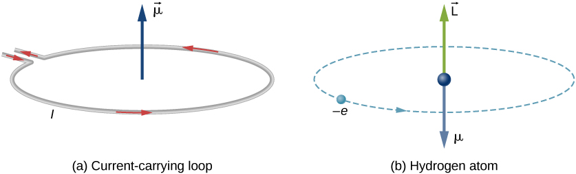 Figure (a) shows a current carrying loop. The loop has current I circulating counterclockwise as viewed from above. A vector mu pointing upward is shown at the center of the loop. Figure (b) shows the hydrogen atom as an electron, represented as a small ball and labeled minus e, making a counterclockwise circular orbit, as viewed from above. A sphere, a vector mu pointing downward, and a vector L pointing upward are shown in the center of the orbit.