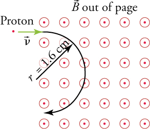 A proton dot enters a magnetic field perpendicularly, making a circular motion.