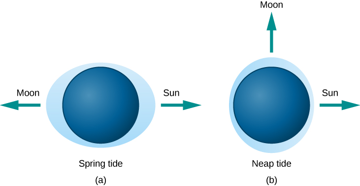 Figure 4.19 Tides Caused by Different Alignments of the Sun and Moon.
