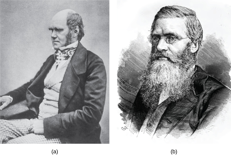 Paintings of Charles Darwin and Alfred Wallace are shown.