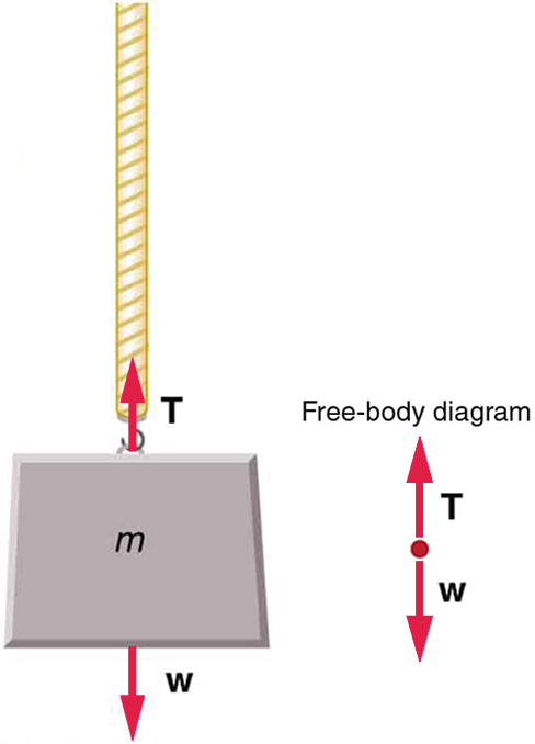 An object labeled m for mass is attached to a rope. A force vector labeled T for tension is pointing upward from the object and a force vector labeled W for weight of the object is pointing downward from the object. A free body diagram illustrates the T and W force vectors.