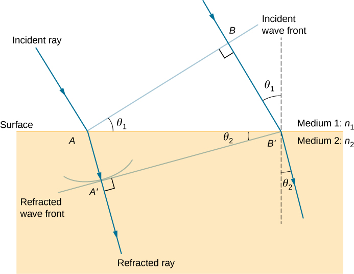 This figure illustrates the geometry of the refraction of the rays and wave fronts. A horizontal surface is present between medium 1, with index of refraction n 1, and medium 2, with index of refraction n 2. An incident ray is shown coming in from medium 1 into medium 2. It hits the surface at point A and refracts toward the normal in medium 2.  A line, labeled incident wave front, is drawn from point A extending away from the surface, perpendicular to the incident ray. The angle between the incident wave front and the surface is theta 1. A second incident ray is drawn parallel to the first one. This ray intersects the incident wave front at a point labeled as B and hits the surface at a point labeled as B prime. A dashed line is drawn perpendicular to the surface at B prime. The angle between this perpendicular line and the second ray is also theta one.  The triangle formed by A, B, and B prime is a right triangle with angle theta one at A and a right angle at B. The refracted rays at A and B prime bend down, toward the downward perpendiculars to the surface, making an angle of theta two with the vertical direction.  The refracted wave front that is perpendicular to the refracted rays and that hits the surface at B prime is drawn. This wave front hits the refraction of the first incident ray at a point marked A prime and makes an angle of theta two with the surface.
