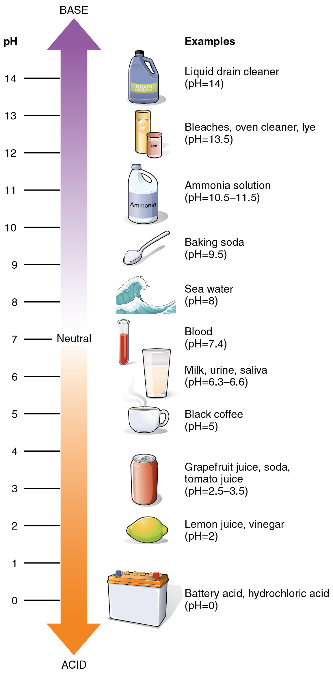 This figure shows a vertical arrow with the top half showing the basic scale and the bottom half showing the acidic scale. Different chemicals and their pH are also shown.