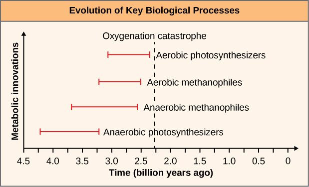 This graph is labeled Evolution of Key Biological processes. The Y axis is labeled Metabolic Innovations and the X axis is labeled Time (billion years ago) with the markings, 4.5, 4.0, 3.5, 3.0, 2.5, 2.0, 1.5, 1.0, 0.5, and 0. The first markings from 4.2 to 3.2 is a straight red line marked Anaerobic Photosynthesizers. The second red line goes from 3.7 to 2.5 and it is labeled Anerobic methanophiles. The next red line is from 3.2 to 2.5 and it is labeled Aerobic Methanophiles. The last red line goes from 3.0 to 2.2 and is labeled aerobic photosynthesizers.