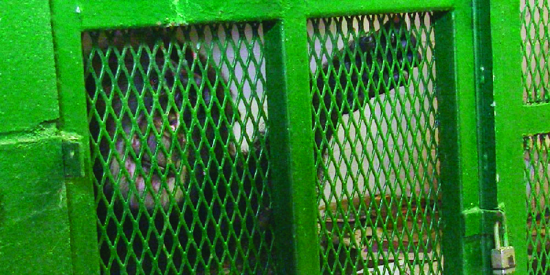 This image shows a chimpanzee locked up in a cage.