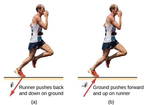 Figure a shows the picture of a runner, labeled, runner pushes back and down on ground.  An arrow labeled F from his foot points down and left. Figure b is labeled, ground pushes forward and up on runner. An arrow labeled –F points up and right, towards his foot.