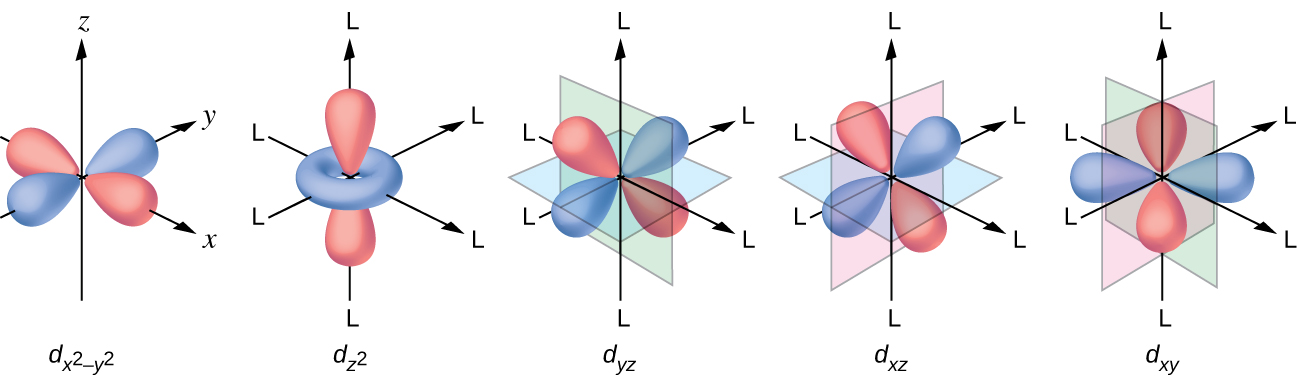 "This figure includes diagrams of five d orbitals. Each diagram includes three axes. The z-axis is vertical and is denoted with an upward pointing arrow. It is labeled ""z"" in the first diagram. Arrows similarly identify the x-axis with an arrow pointing from the rear left to the right front, diagonally across the figure and the y-axis with an arrow pointing from the left front diagonally across the figure to the right rear of the diagram. These axes are similarly labeled as ""x"" and ""y."" In this first diagram, four orange balloon-like shapes extend from a point at the origin out along the x- and y- axes in positive and negative directions covering just over half the length of the positive and negative x- and y- axes. Beneath the diagram is the label, ""d subscript ( x superscript 2 minus y superscript 2 )."" The second diagram just right of the first is similar except the x, y, and z labels have been replaced in each instance with the letter L. Only a pair of the orange balloon-like shapes are present and extend from the origin above and below along the vertical axis. An orange toroidal or donut shape is positioned around the origin, oriented through the x- and y- axes. This shape extends out to about a third of the length of the positive and negative regions of the x- and y- axes. This diagram is labeled, ""d subscript ( z superscript 2 )."" The third through fifth diagrams, similar to the first, show four orange balloon-like shapes. These diagrams differ however in the orientation of the shapes along the axes and the x-, y-, and z-axis labels have each been replaced with the letter L. Planes are added to the figures to help show the orientation differences with these diagrams. In the third diagram, a green plane is oriented vertically through the length of the x-axis and a blue plane is oriented horizontally through the length of the y-axis. The balloon shapes extend from the origin to the spaces between the positive z- and negative y- axes, positive z- and positive y- axes, negative z- and negative y- axes, and negative z- and positive y- axes. This diagram is labeled, ""d subscript ( y z )."" In the fourth diagram, a green plane is oriented vertically through the x- and y- axes and a blue plane is oriented horizontally through the length of the x-axis. The balloon shapes extend from the origin to the spaces between the positive z- and negative x- axes, positive z- and positive x- axes, negative z- and negative x- axes, and negative z- and positive x- axes. This diagram is labeled ""d subscript ( x z )."" In the fifth diagram, a pink plane is oriented vertically through the length of the y-axis and a green plane is oriented vertically through the length of the x-axis. The balloon shapes extend from the origin to the spaces between the positive x- and negative y- axes, positive x- and positive y- axes, negative x- and negative y- axes, and negative x- and positive y- axes. This diagram is labeled, ""d subscript ( x y )."""